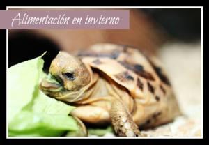 alimentar a tortuga en invierno