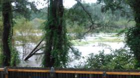 Diana Roberts? back yard near wallace pond