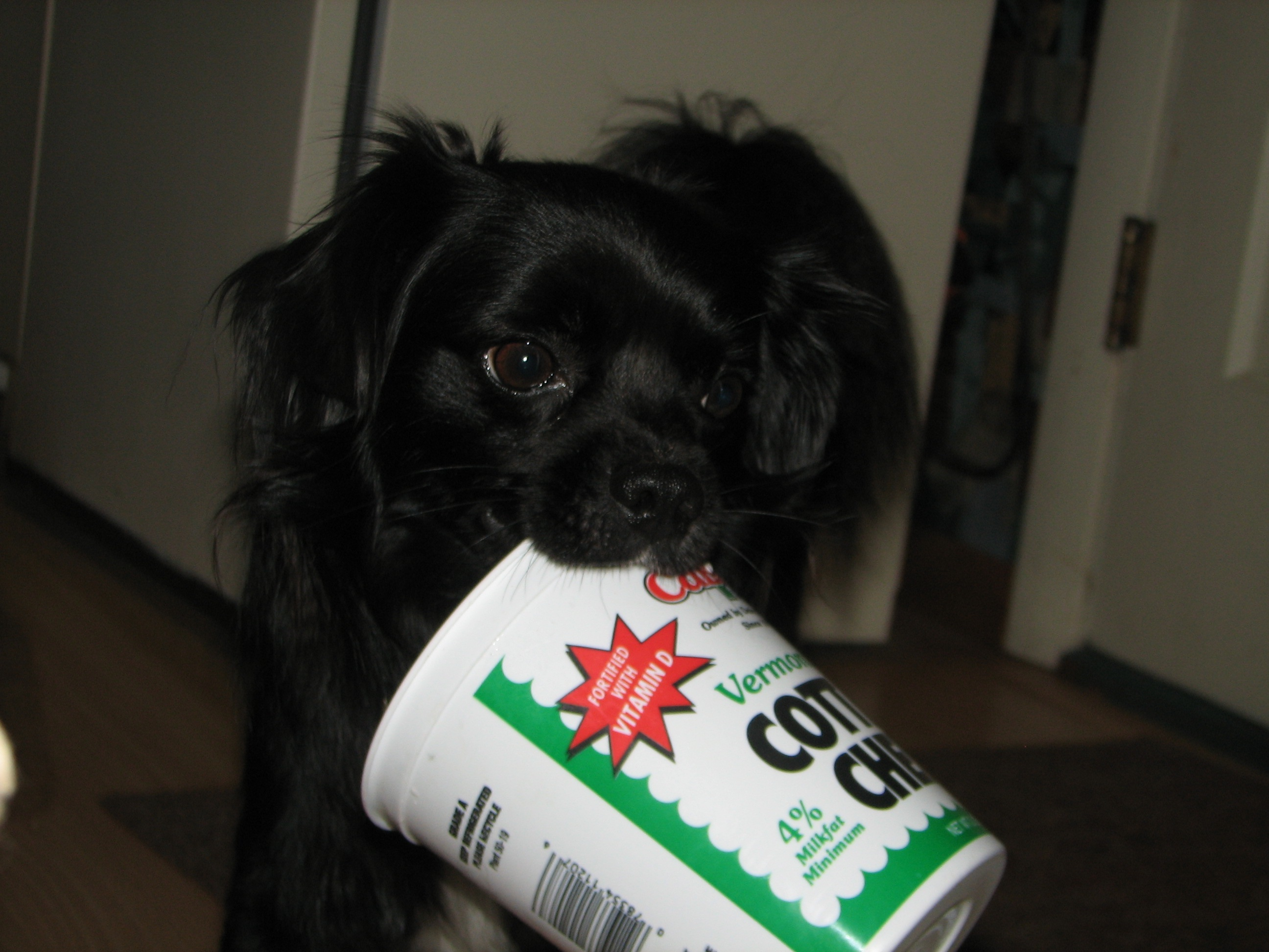 Fullsize Of Cottage Cheese For Dogs