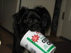 Small Of Cottage Cheese For Dogs