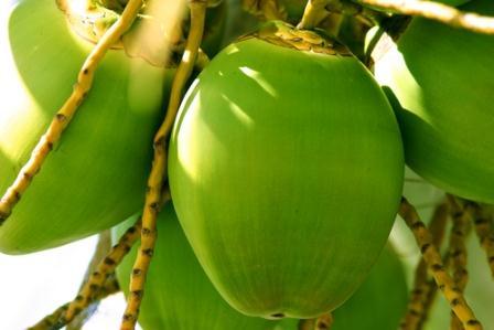 CoconutviaShutterstock