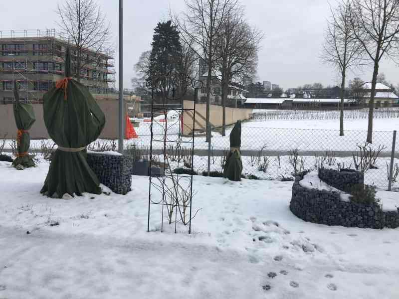 Winterstimmung Feigengarten Januar 2016 (2)