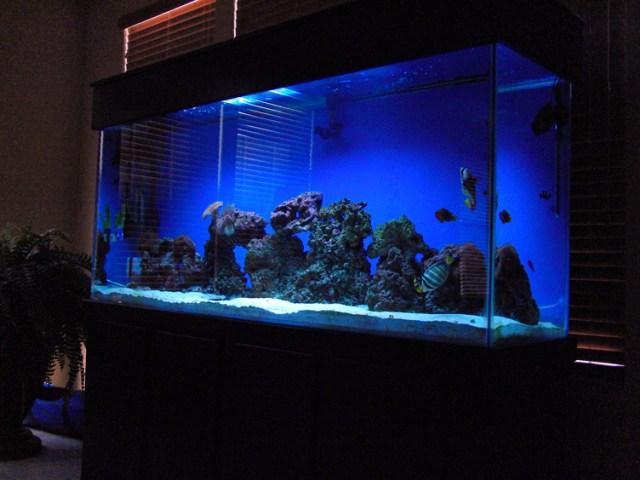 of Salt Water Fish Tanks   Only At Feldman's Aquarium Maintenance