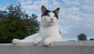 cat-1625838_960_720