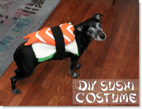 DIY Sushi Costume for a Dog