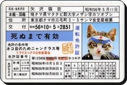 2013 08 30 100643 【動画】仲良し犬と猫。残念な結末!なめたらアカンぜよ!