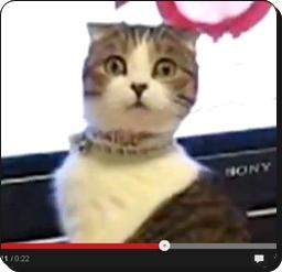 2013 08 30 134224 日本アカデミー最優秀賞をあげたい!ビビり顔が最上級の【ネコ】
