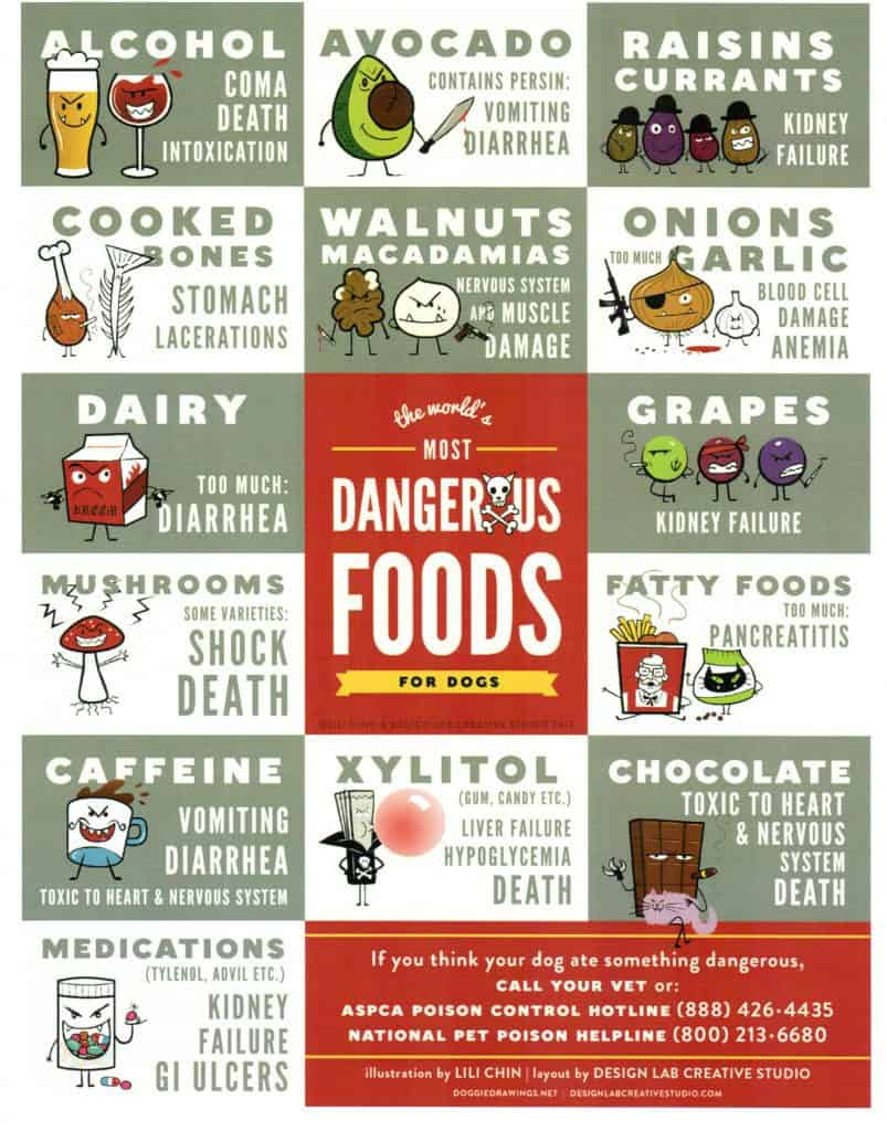 Considerable Toxic Food Reality Can Dogs Eat Avocado Pears Can Dogs Eat Avocado Uk Dogs Are Homemade Dog Treats Really Fidose bark post Can Dogs Eat Avocado