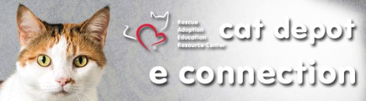 Cat Depot The Resource for Rescue Adoption Education