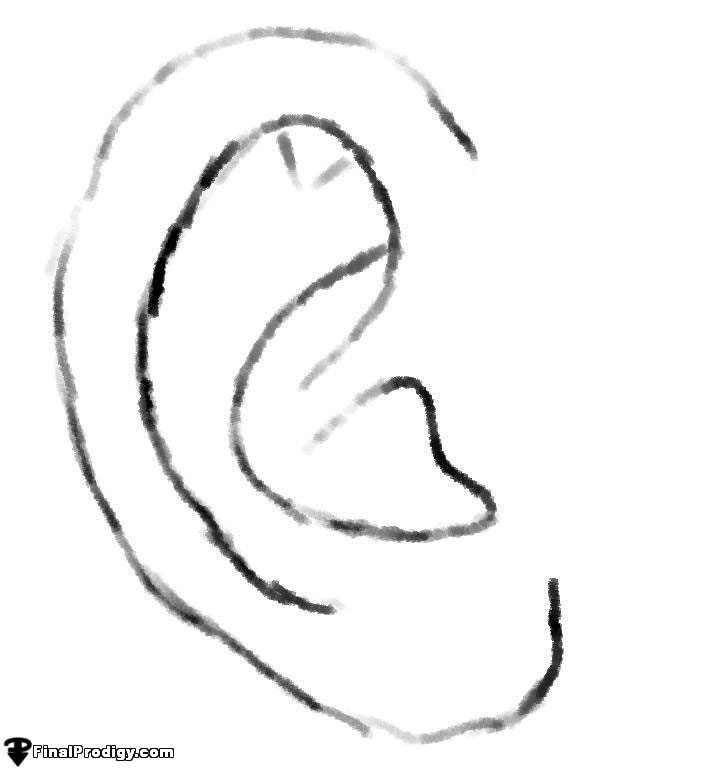 Line Drawing Ear : How to sketch an ear finalprodigy