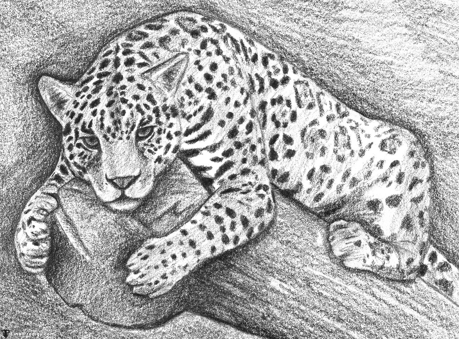 Cool Jaguar Drawings The Rest Of The Drawing How To Draw Jaguar Eyes