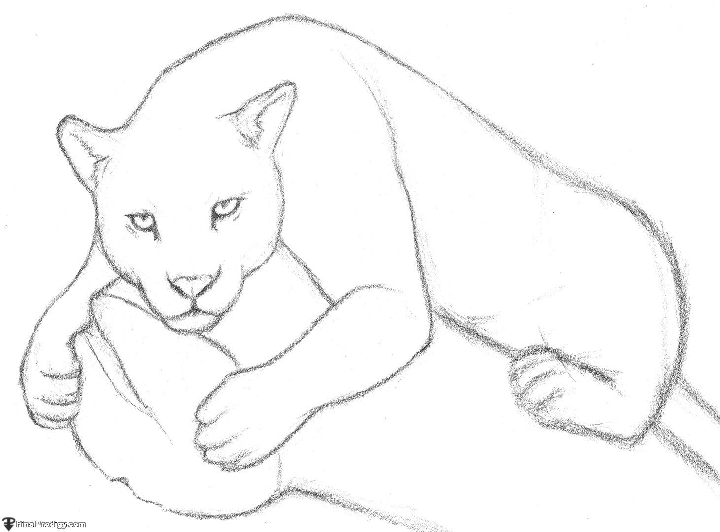 Line Drawing Jaguar : How to draw a jaguar finalprodigy