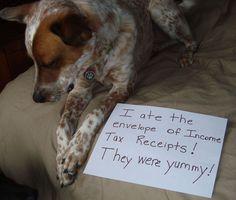 dog ate my tax receipts