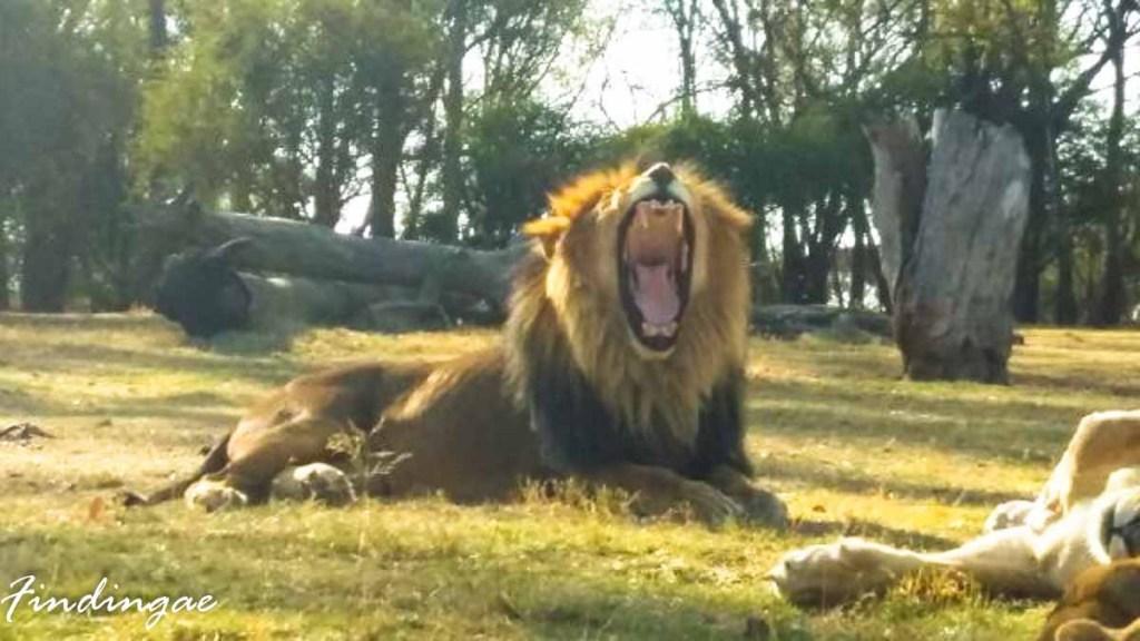 Lion Park Capetown