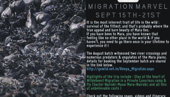 kenya-migration-go-wild-travel-offer-september-2016