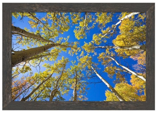 Golden View Looking Up Framed Print