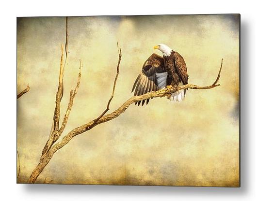Majestic Eagle Point Metal Print