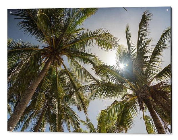 Tropical Sun Acrylic Print