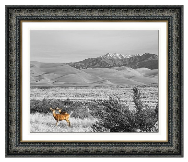 Great Colorado Sand Dunes Deer Framed Print