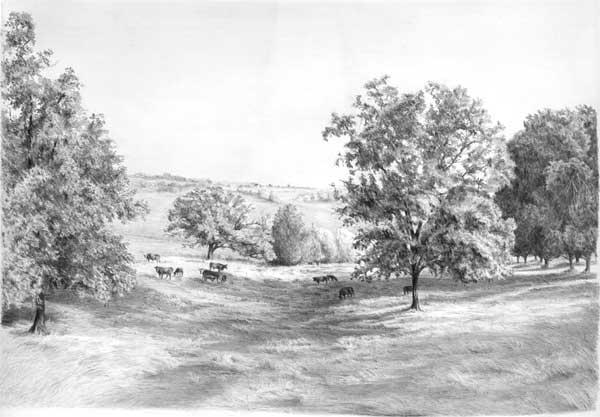 tree-pencil-drawing