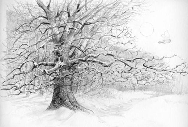 tree-drawings