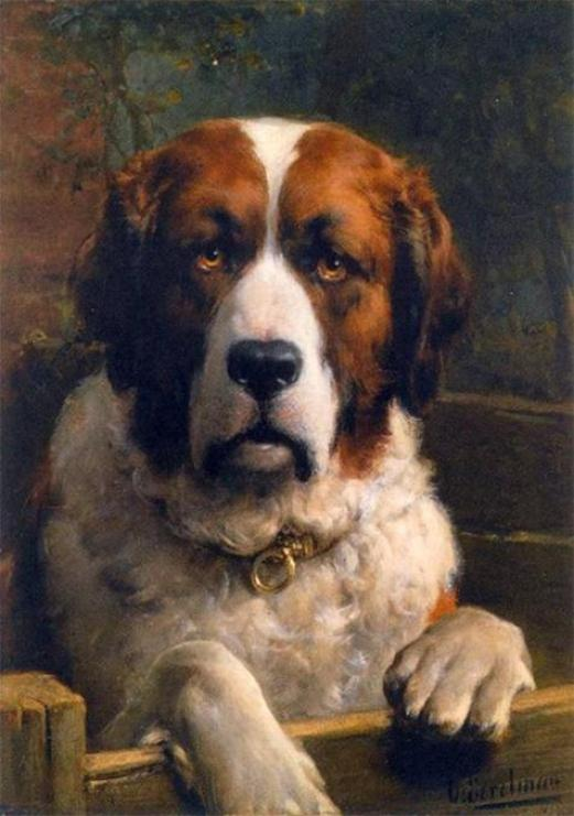Saint-Bernard-Dog