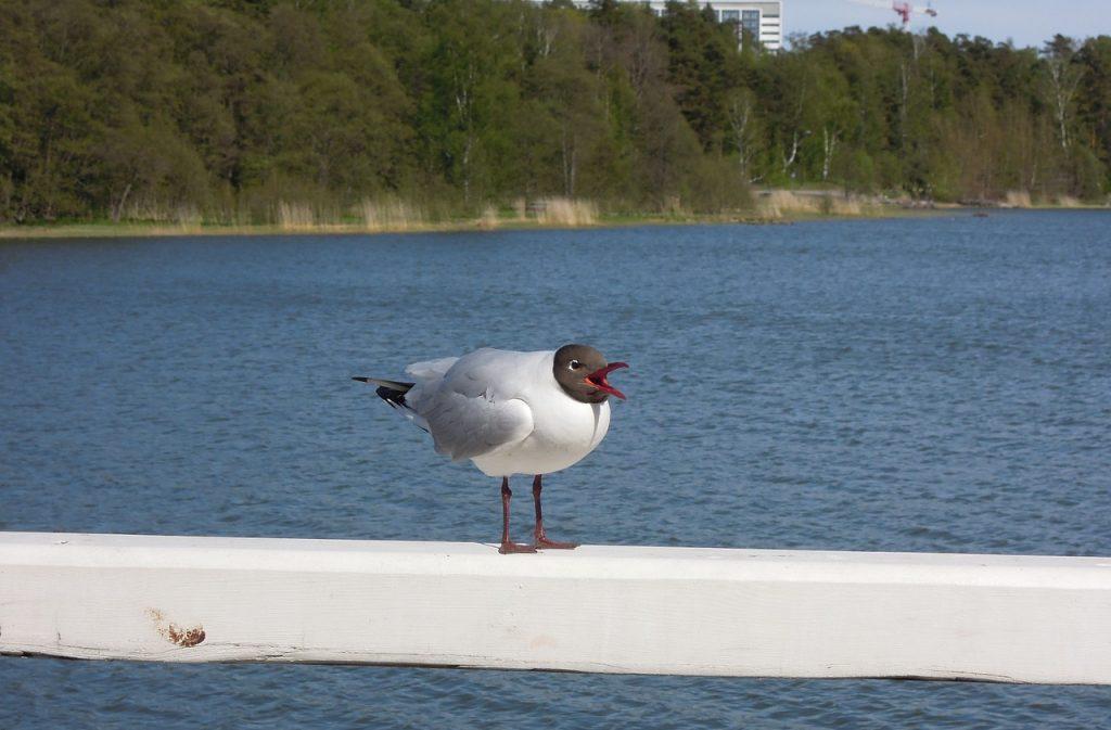ヘルシンキの爽やかな夏とカモメ