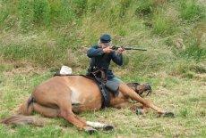 Historical reenactor shooting over fallen horse