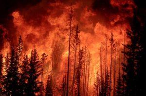 grootfire