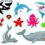 חיות הים לפי צורה