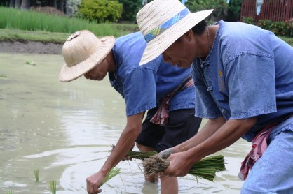 We were given our rice planting uniforms, too.