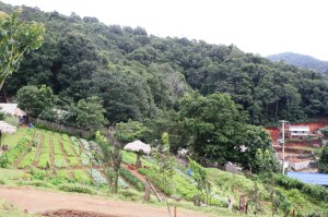 Plantations in the hill areas of Mae Rim District.