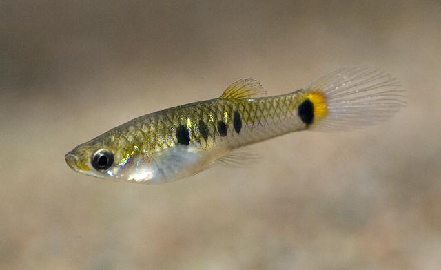 Fish Identification: Find Species