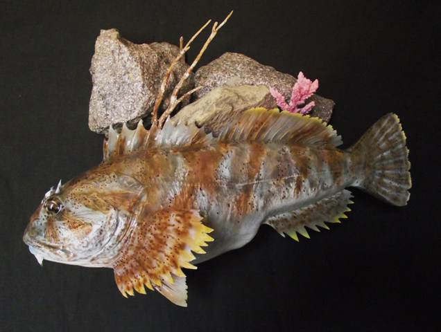 Fish Creation's Gallery Saltwater Fish Reproductions Replicas Fish