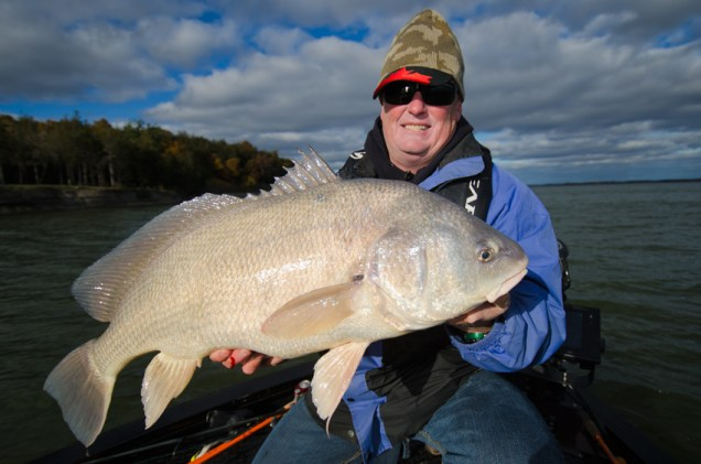Kevin Lavers of Merland Park Cottages holds a true giant Ontario Sheephead. Probably only 5lbs from a record!