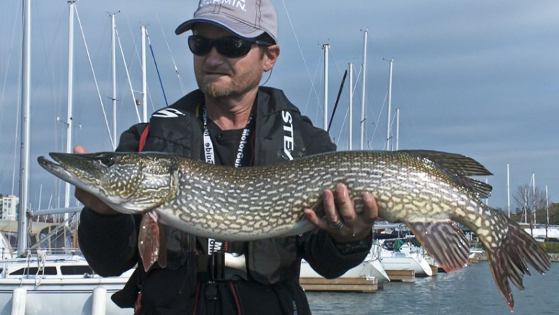 This is considered a very good southern Ontario Pike, but it wasn't Pete's biggest of the shoot