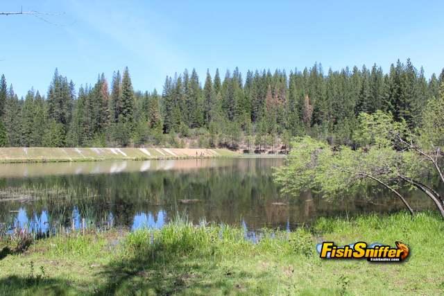 White Pines Scenery_web
