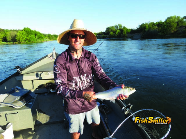 Cameron Beck of American River Charters put the Fish Sniffer Team on big numbers of American River shad during a fishing and video shooting expedition on June 6.