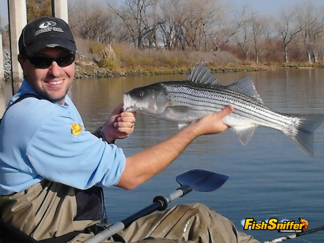 Fish Sniffer staffer Wes Ward with a keeper striper caught trolling at the Port of Sacramento.