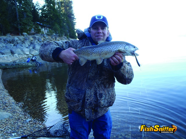 Mike McNeilly tempted this dandy Lake Almanor brown while working a minnow plug on chilly January day.