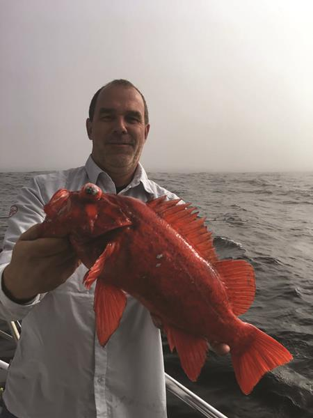 Big rockfish have been the rule for anglers fishing beyond the Golden Gate aboard the Sea Wolf. This big vermilion came over the rail.