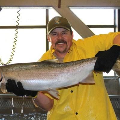 Greg Ferguson, CDFW Fish & Wildlife Technician, displays a big, beautiful Eel River-strain steelhead at Nimbus Fish Hatchery