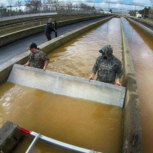 CDFW workers conducting a salmon rescue operation at the Feather River Fish Hatchery below Oroville Dam. CDFW photo.