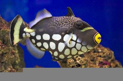 Tropical Saltwater & Freshwater Fish Stores in North Carolina