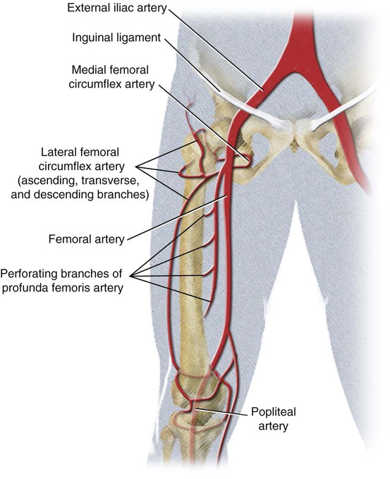 Whats Causing Your Leg Pain When Cycling The Rundown On External