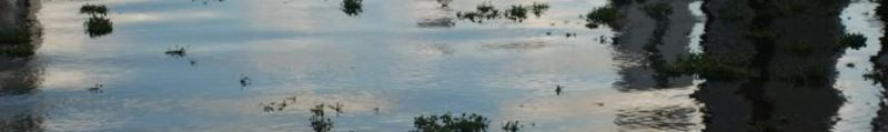 cropped-bridgerecife.jpg