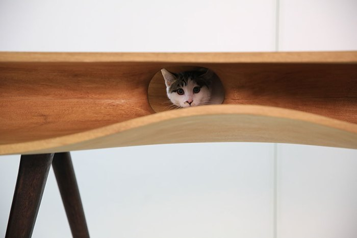 感覺會藏很多老鼠