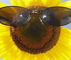 Protector solar para plantas