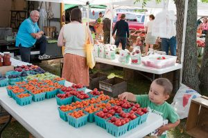 young boy helps himself to a cherry tomato at the farmers market