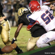 ManateeFeaturedPreview